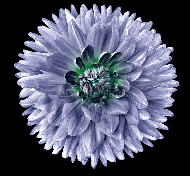 Fleur d'isolement sur le fond noir Pour la conception closeup Un foyer plus clair image stock