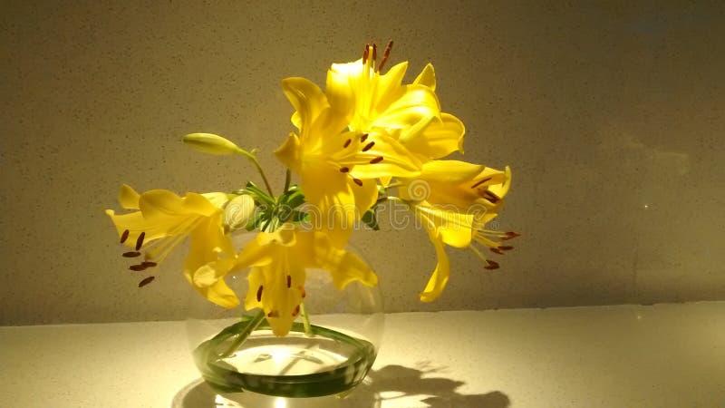 Fleur d'or jaune images stock