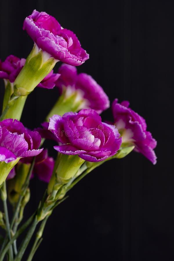 Fleur d'oeillet image libre de droits
