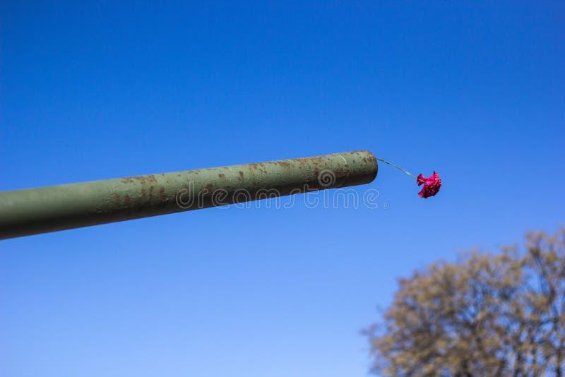 Fleur d'oeillet dans le museau du réservoir contre le ciel bleu, le concept de la paix et la mémoire images stock