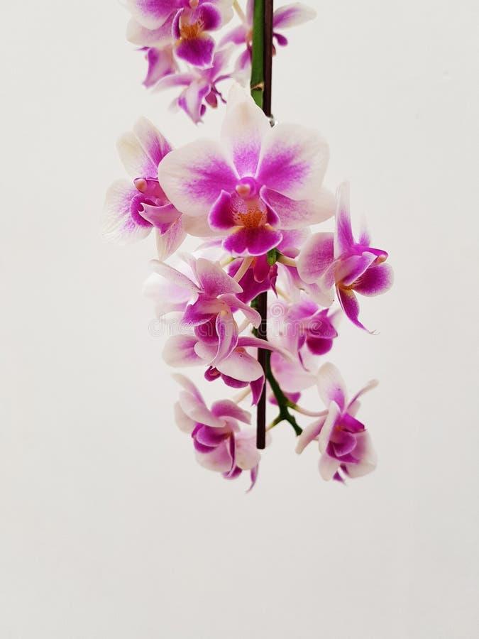 orchidee a l'envers