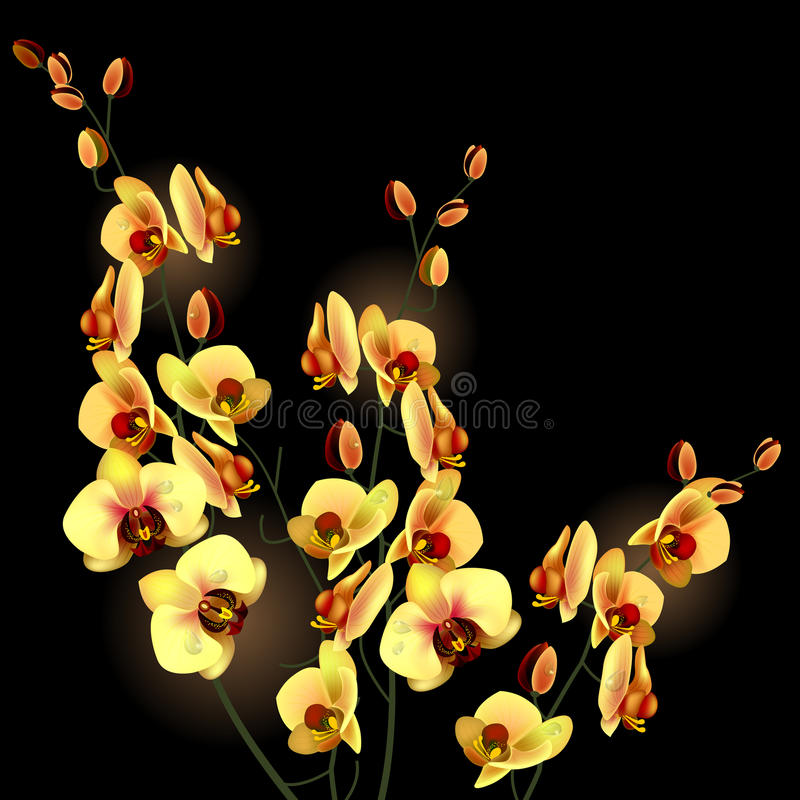 Fleur d'orchidée illustration libre de droits