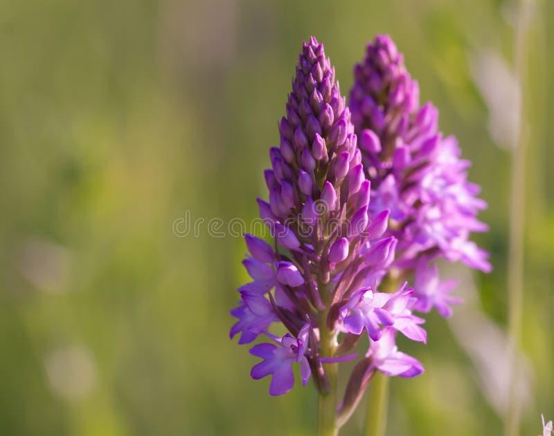 Download Fleur d'orchidée image stock. Image du floral, nature - 87701531