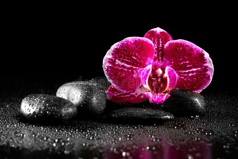 Fleur d'orchidée avec des pierres de zen image stock
