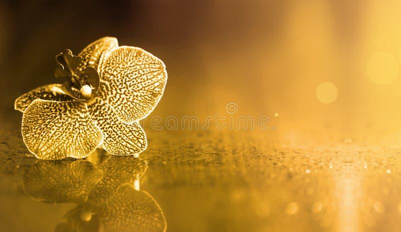 Fleur d'orchidée avec la réflexion photo stock