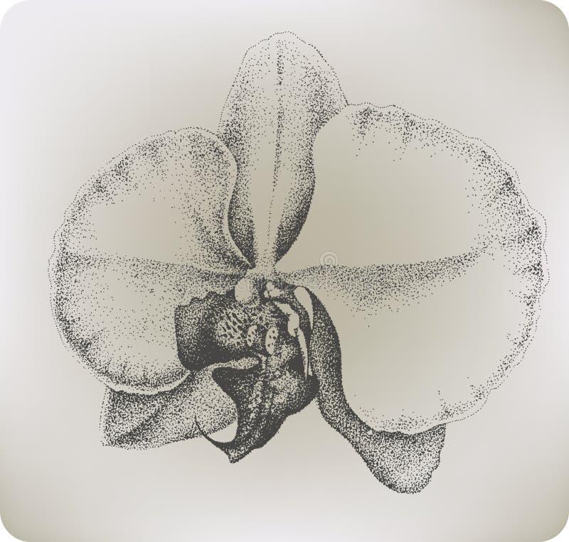 Fleur d'orchidée, dessin de main. Illustration de vecteur. illustration stock
