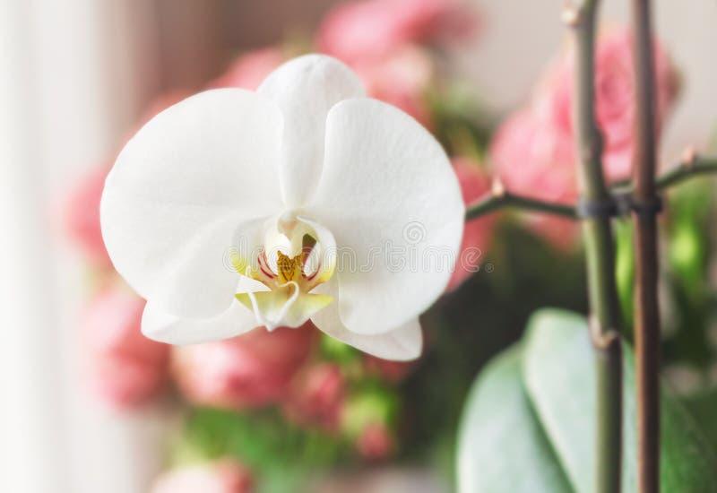 Fleur d'orchidée d'offre de blanc photos libres de droits