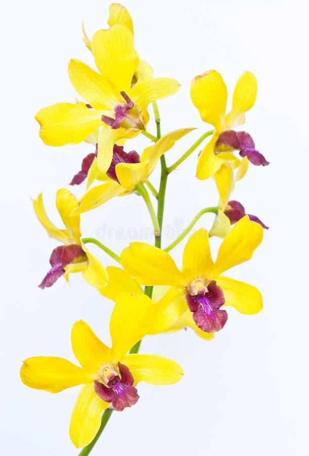 Fleur d'orchidées photographie stock libre de droits
