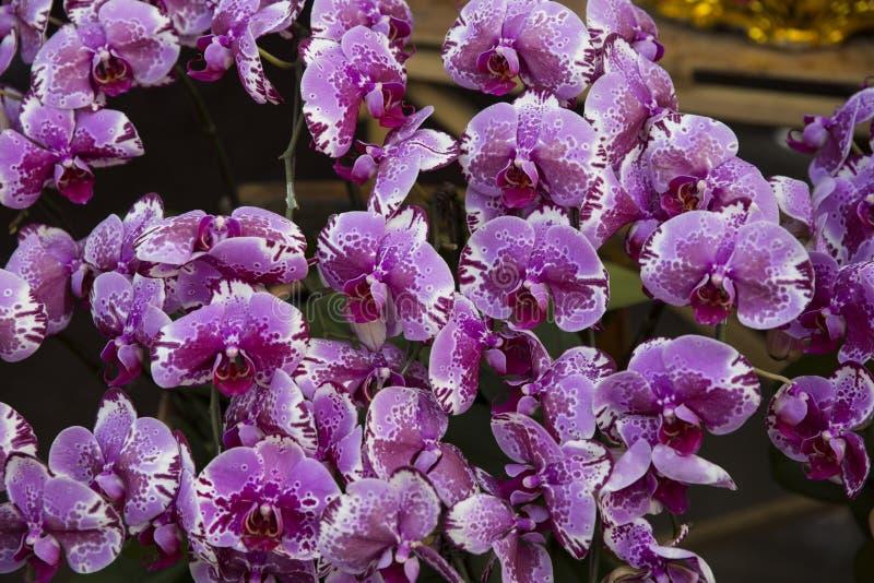 Fleur d'orchidées photos libres de droits