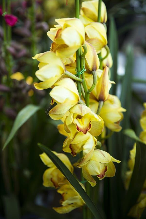 Fleur d'orchidées image libre de droits