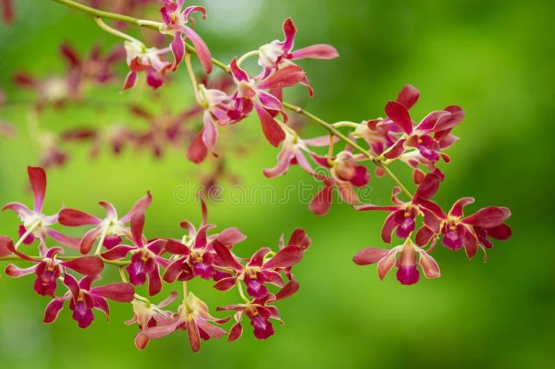 Fleur d'orchid?e dans le jardin images stock