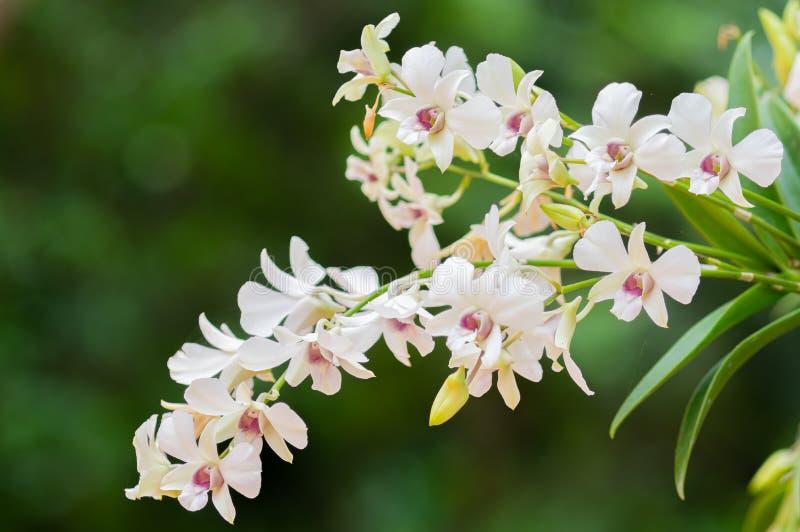 Fleur d'orchid?e dans le jardin photo stock