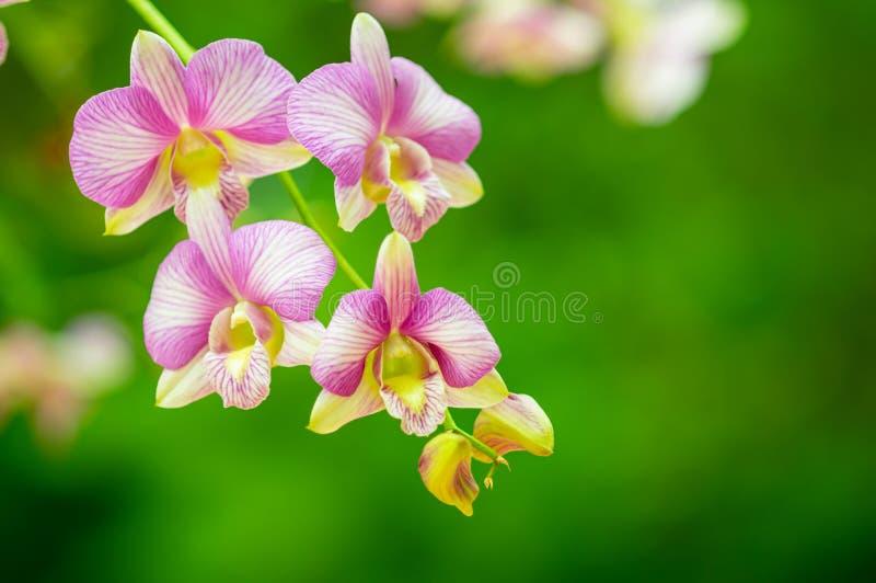 Fleur d'orchid?e dans le jardin images libres de droits