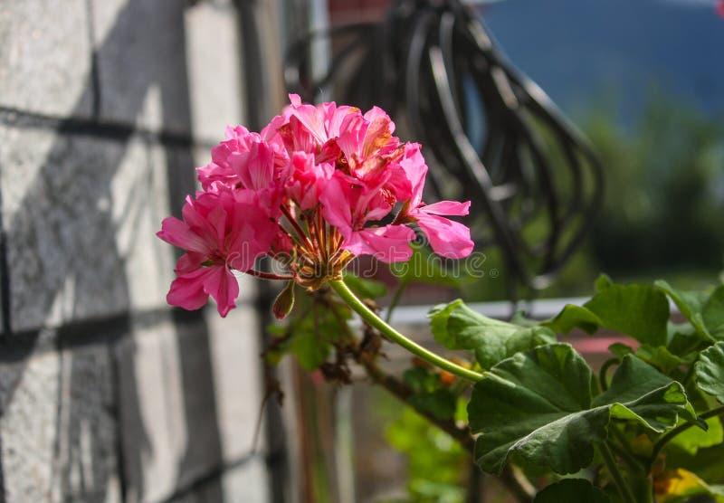 Fleur d'?t? photo libre de droits
