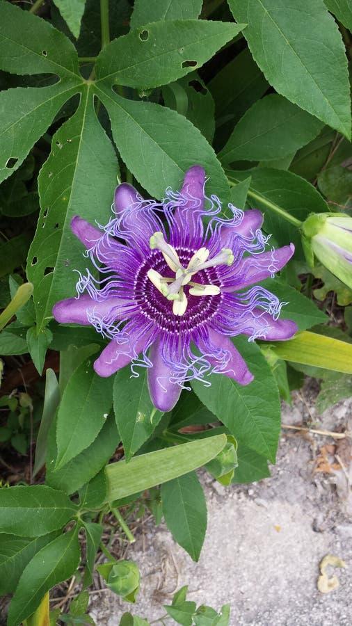 Fleur d'usine de nature photo stock
