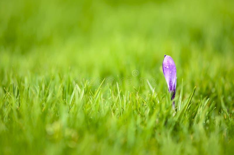 Fleur dans l'herbe photo stock