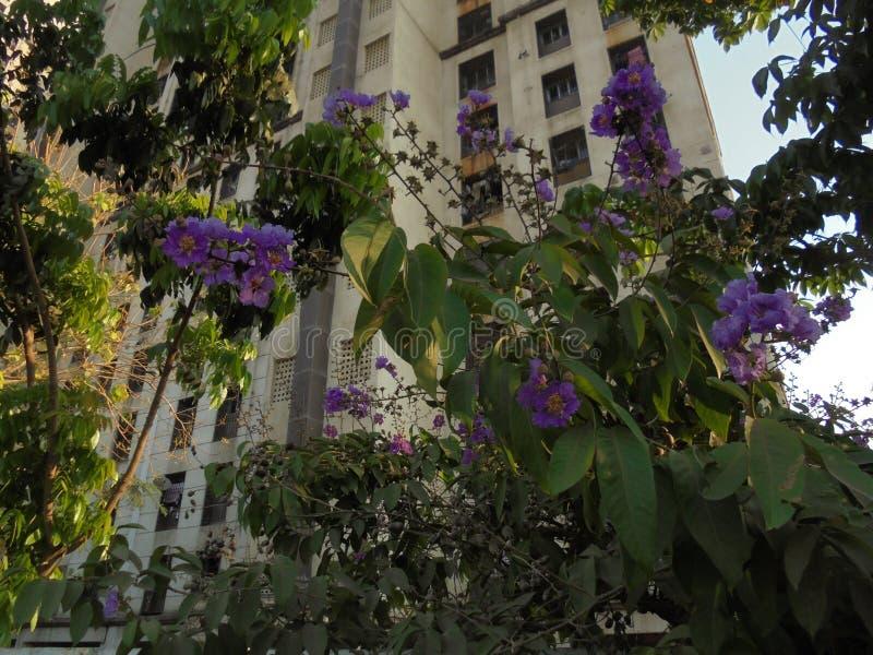 Fleur dans l'Inde images libres de droits
