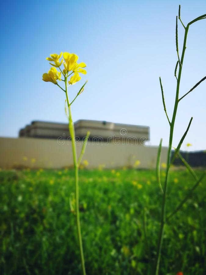 Fleur dans la ferme image libre de droits
