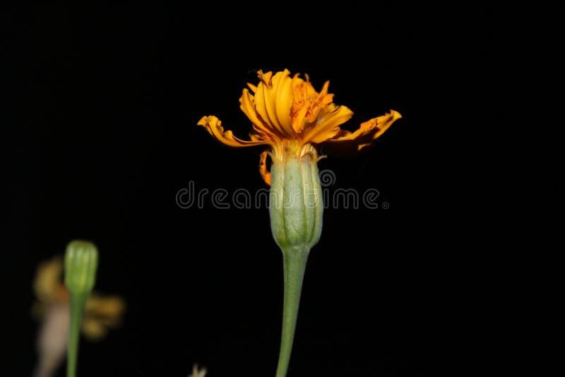 Fleur dans la nuit photo stock