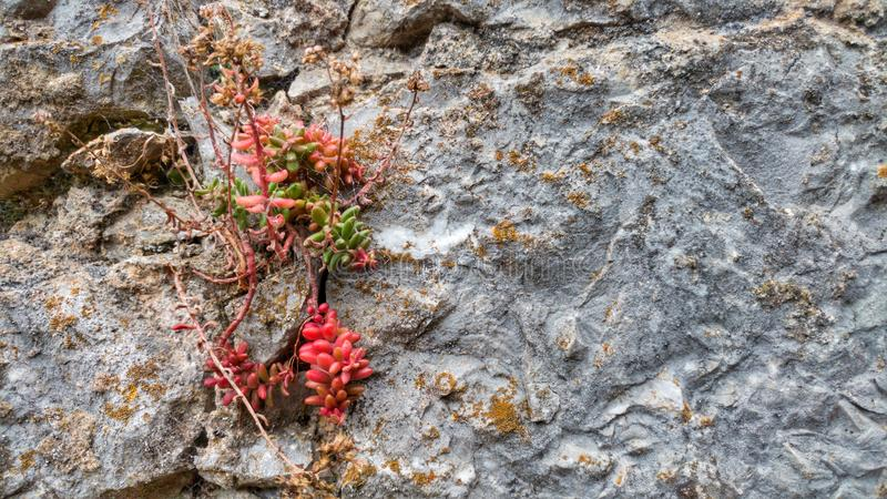 Fleur dans la roche photographie stock libre de droits