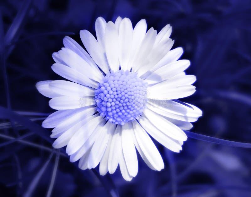 Fleur dans le bleu image libre de droits