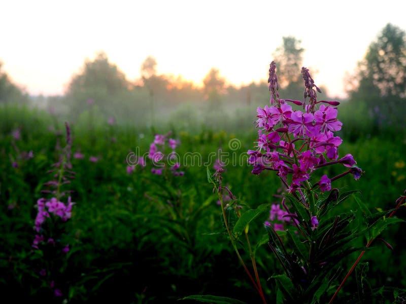 Fleur dans le brouillard images libres de droits