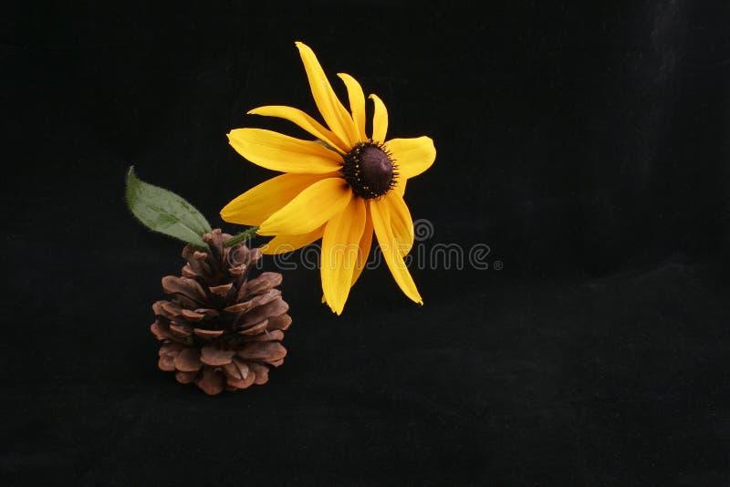 Fleur dans le cône photos stock