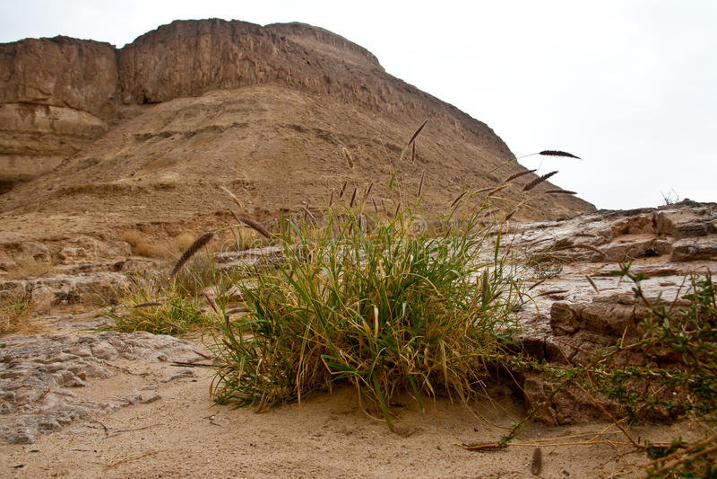 Fleur dans le désert photographie stock libre de droits