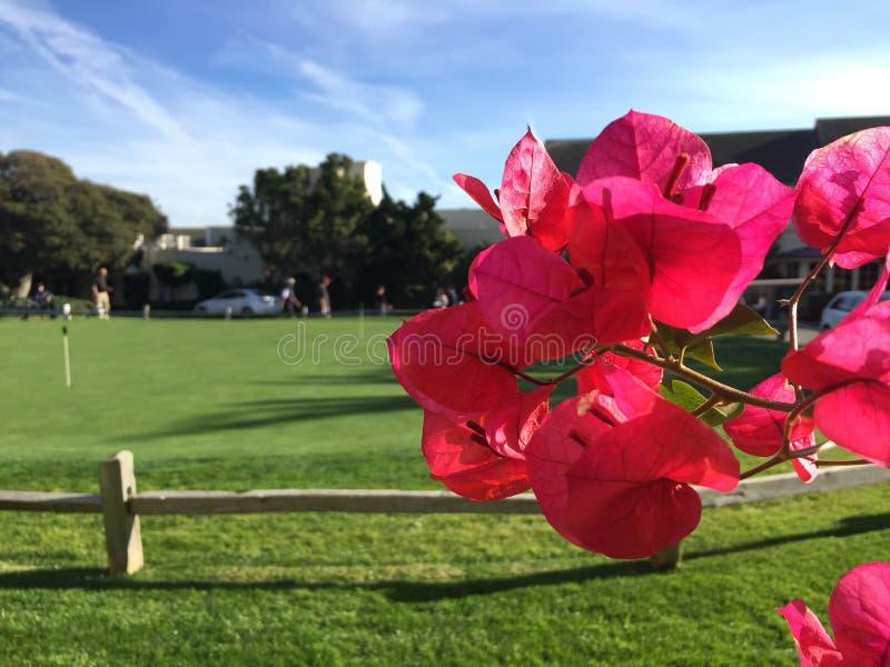 Fleur dans le domaine de golf photo stock