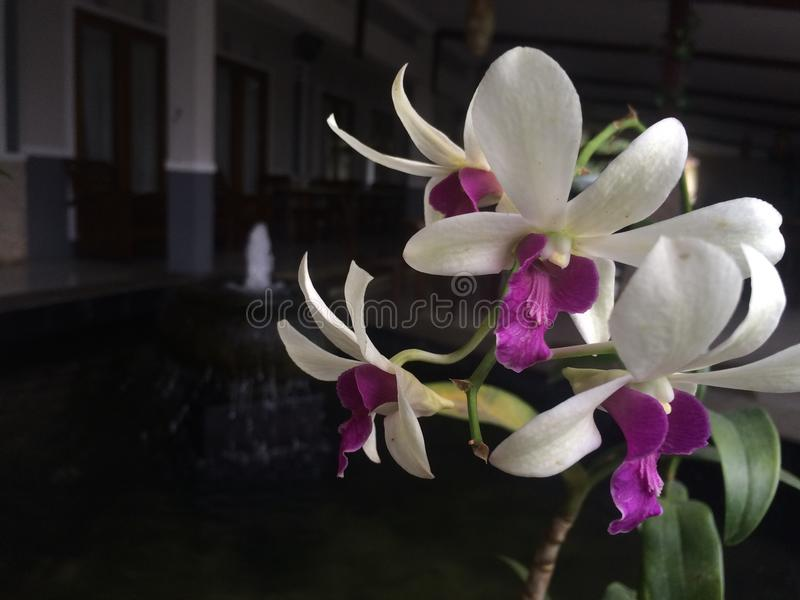 Fleur dans le jardin photographie stock libre de droits