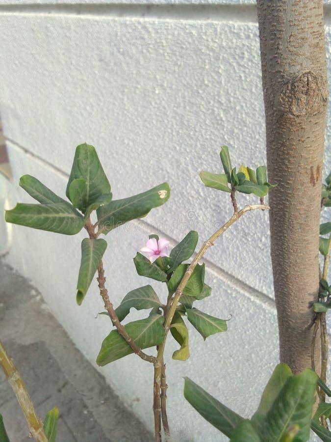Fleur dans le jardin dans des feuilles d'arbre et vert et des fleurs image libre de droits