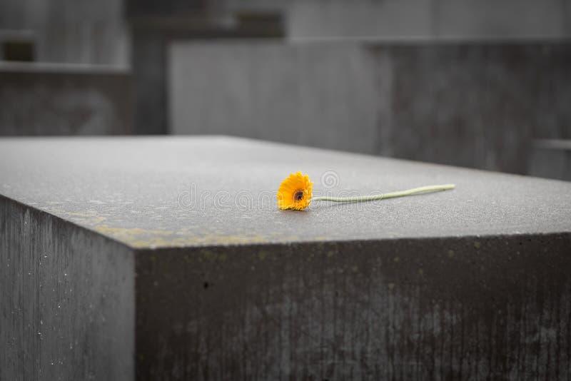 Fleur dans le mémorial aux juifs assassinés de l'Europe à Berlin, Ger images stock