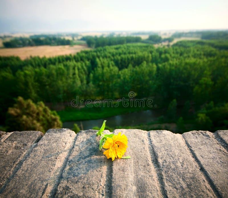 Fleur dans le mur de ville photos stock