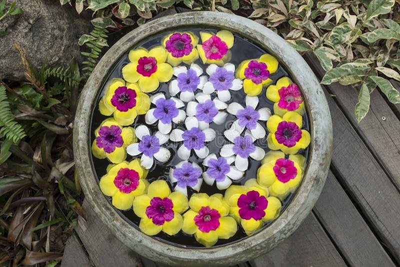 Fleur dans le pot photos stock