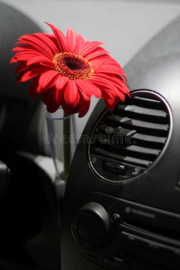 Fleur dans le véhicule image libre de droits