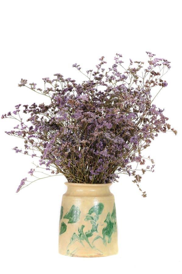 Fleur dans le vase photographie stock libre de droits