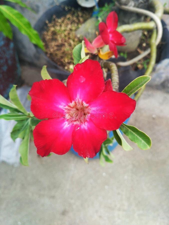 fleur dans mon jardin photographie stock