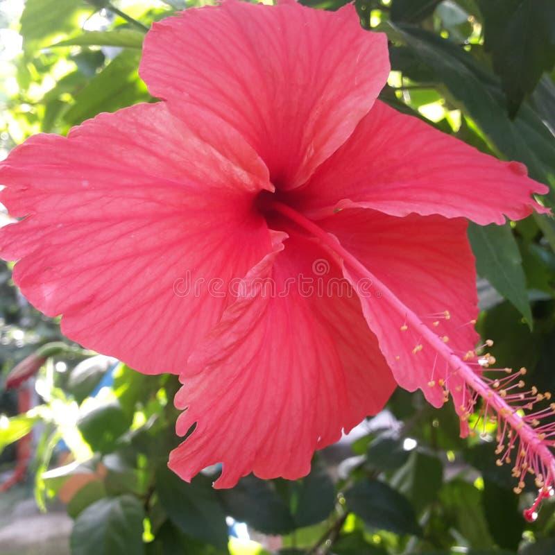 Fleur dans mon jardin doux image libre de droits