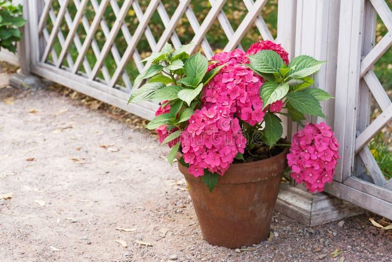 Fleur dans un bac photo libre de droits