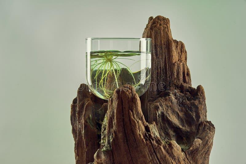 Fleur dans un verre sur un arbre images libres de droits