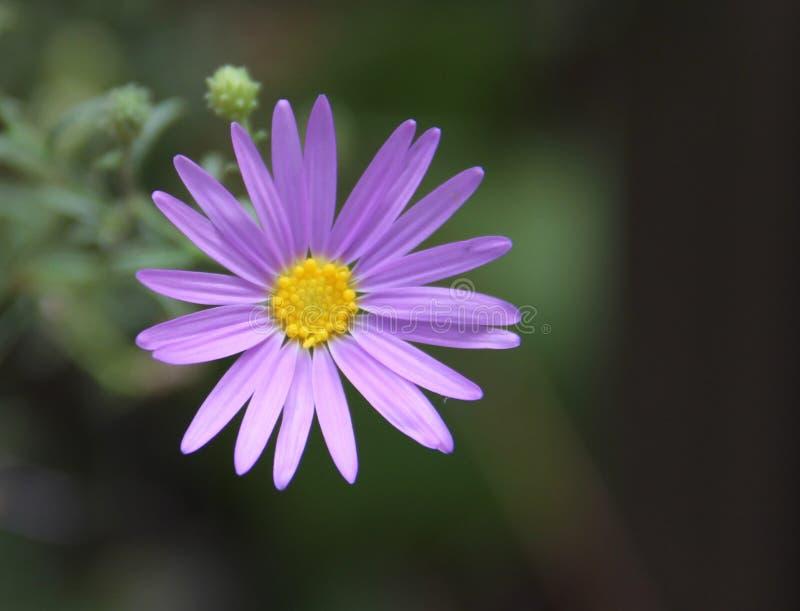 Fleur dans Zion NP photos stock