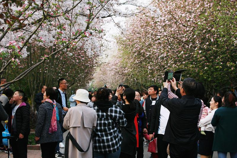 fleur de bégonia photo stock