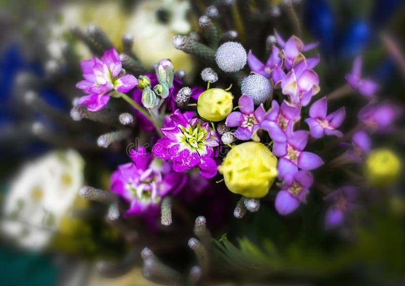 Fleur de bouquet de fleur, pourpre et jaune photo stock
