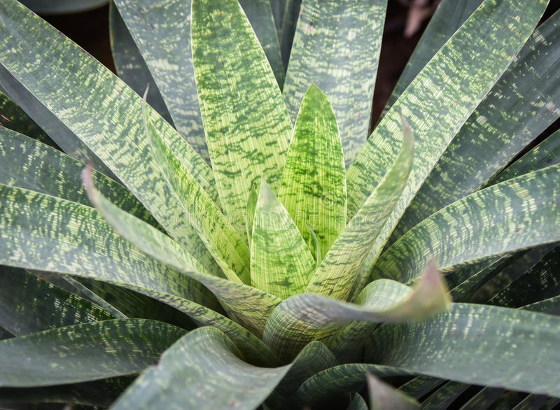 Fleur de Bromeliad photo libre de droits