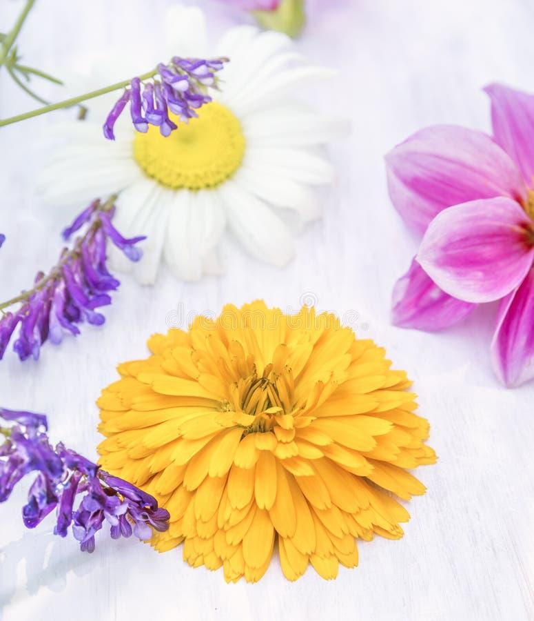 Fleur de Calendula sur la table blanche photographie stock libre de droits