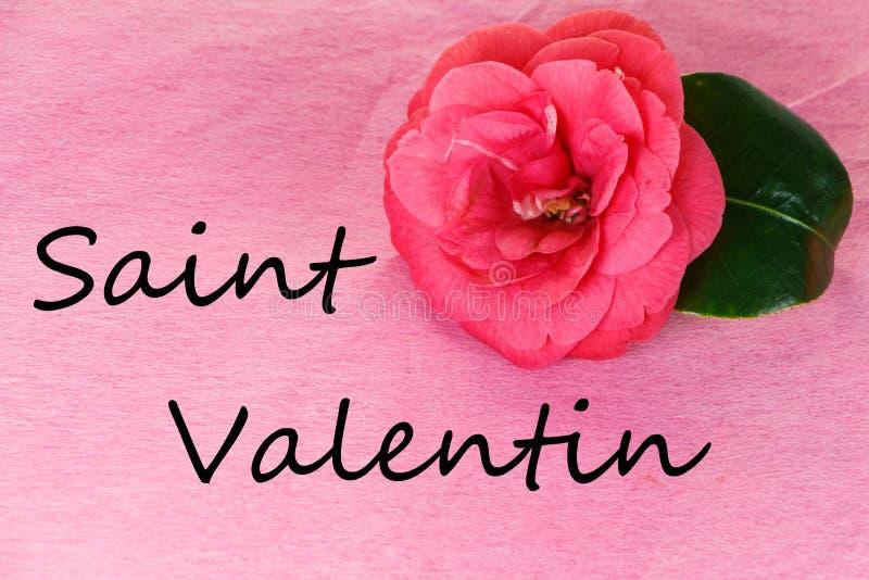 Fleur de camélia pour la Saint-Valentin photos libres de droits