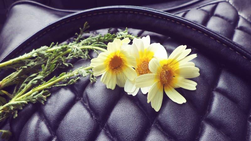 Fleur de camomille photographie stock