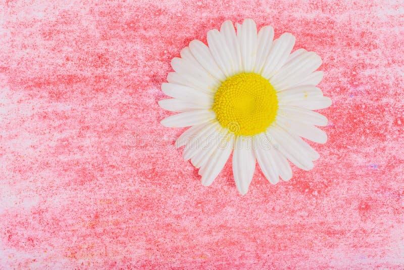 Fleur de camomille sur le fond en bois photos stock