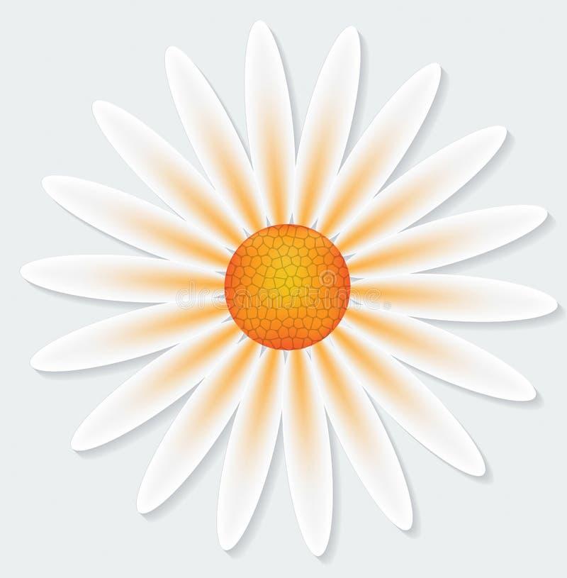 Fleur de camomille sur le fond gris illustration stock