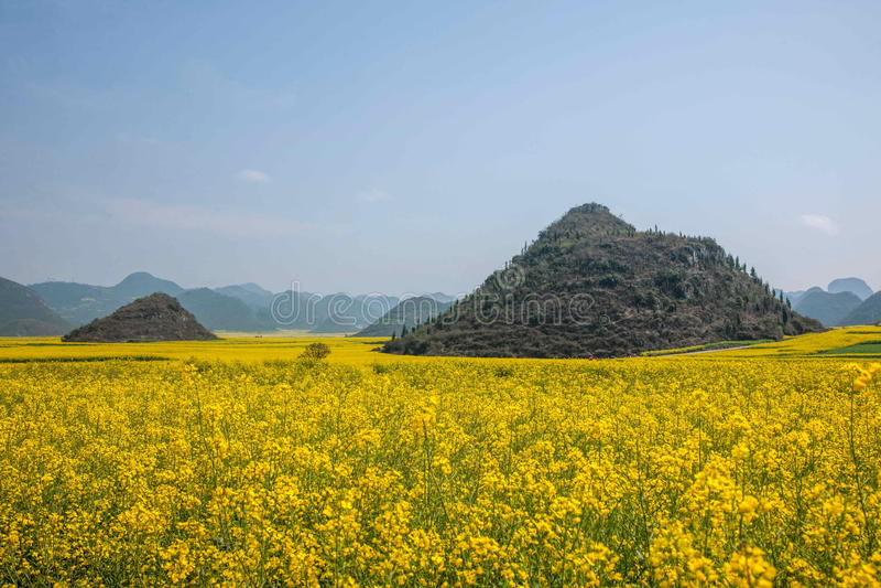 Fleur de canola de Yunnan Luoping sur une petite correction des fleurs Bazi images libres de droits